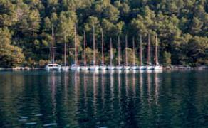 Boat# Types